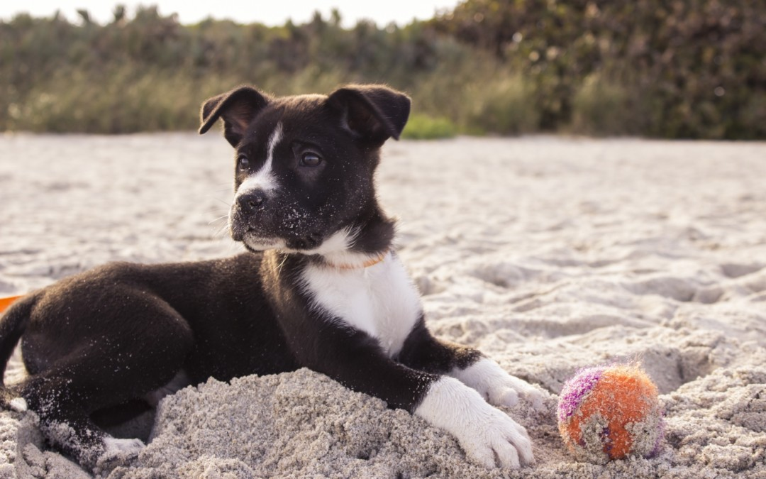 5 Tips for Keeping your Dog Healthy